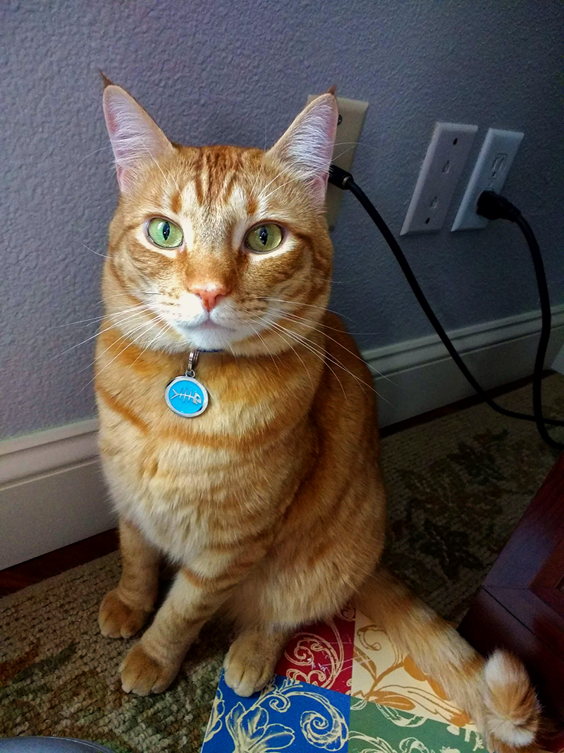 Butterscotch, sitting, and looking at the camera