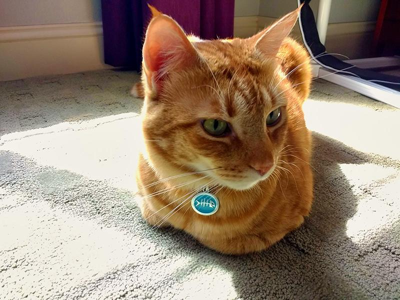 Butterscotch in the sun
