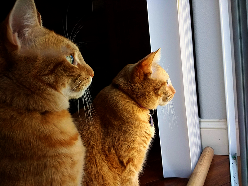Biscuit and Butterscotch both looking out the back door.