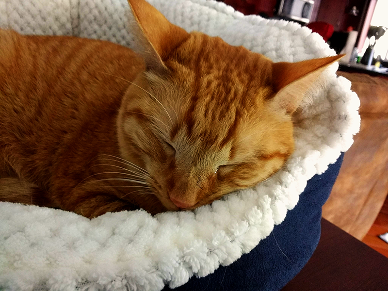 Biscuit sleeping in his bed.