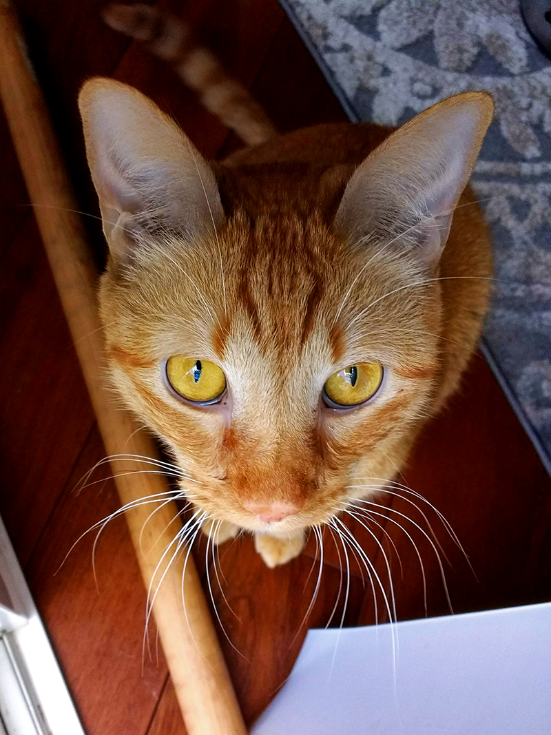 Biscuit, from above, looking at the camera