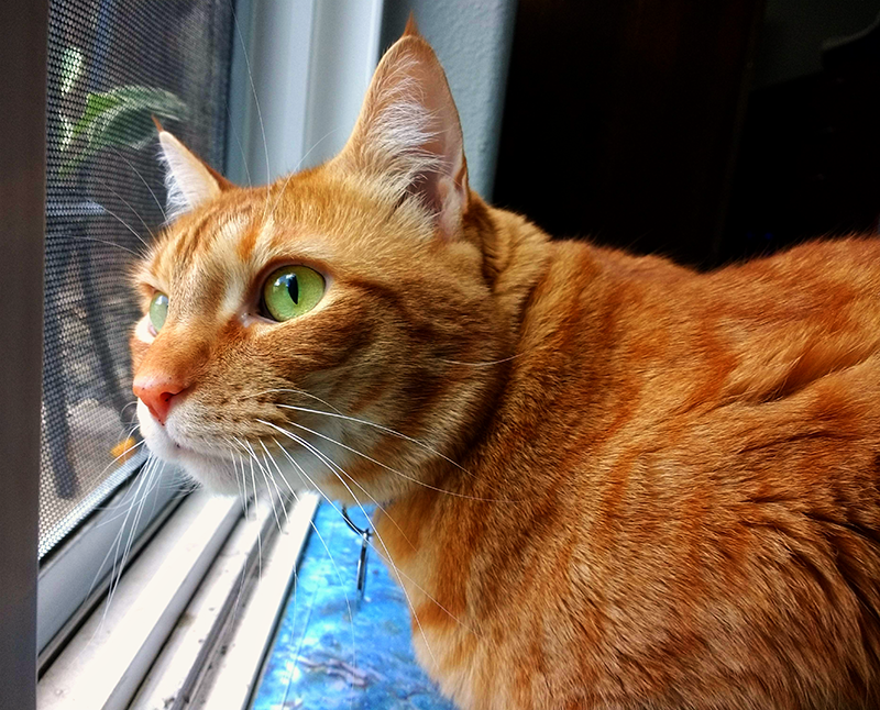 Butterscotch looking out the back door