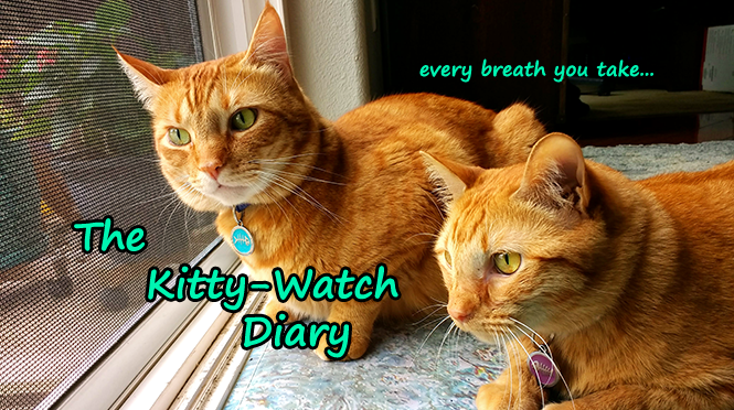 The Kitty-Watch Diary