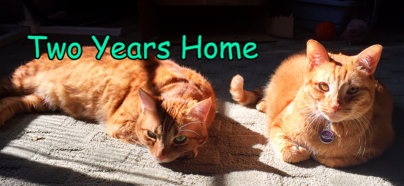 Biscuit and Butterscotch lying in the sun and celebrating two years home